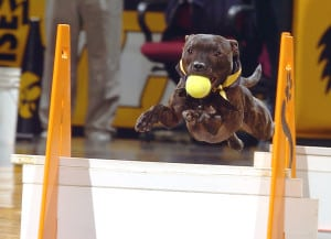 Introduction to Flyball @ Our Gang Pet Services | River Vale | New Jersey | United States