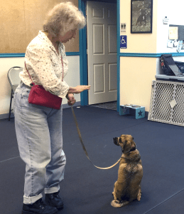 Basic Obedience @ Our Gang Pet Services | River Vale | New Jersey | United States
