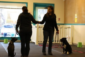 Canine Good Citizen Prep @ Our Gang Pet Services | River Vale | New Jersey | United States
