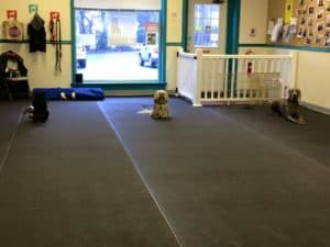 Introduction to Competition Obedience @ Our Gang Pet Services | River Vale | New Jersey | United States
