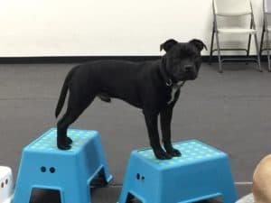 Puppy Agility @ Our Gang Pet Services | River Vale | New Jersey | United States