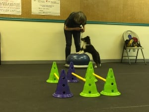 Puppy Agility @ Our Gang Pet Services, LLC | River Vale | New Jersey | United States