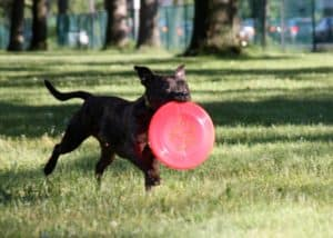 Beginner Frisbee (workshop) @ Our Gang Pet Services, LLC | River Vale | New Jersey | United States