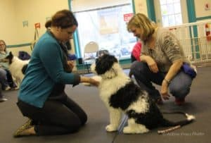 Make Your Dog A Star! (workshop) @ Our Gang Pet Services, LLC | River Vale | New Jersey | United States