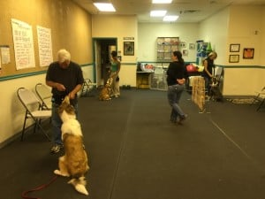 Canine Companions (Intermediate Level) @ Our Gang Pet Services | River Vale | New Jersey | United States