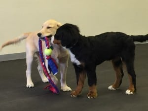 Puppy Social @ River Vale | New Jersey | United States