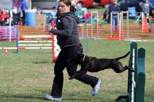 Beginner Agility - Introduction to Obstacles @ Our Gang Pet Services | River Vale | New Jersey | United States