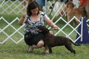 Show Handling - Drop-In @ Our Gang Pet Services, LLC   River Vale   New Jersey   United States