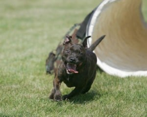 Beginner Agility @ Our Gang Pet Services | River Vale | New Jersey | United States