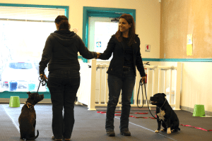 AKC Canine Good Citizen and Trick Dog Testing @ Our Gang Pet Services, LLC | River Vale | New Jersey | United States