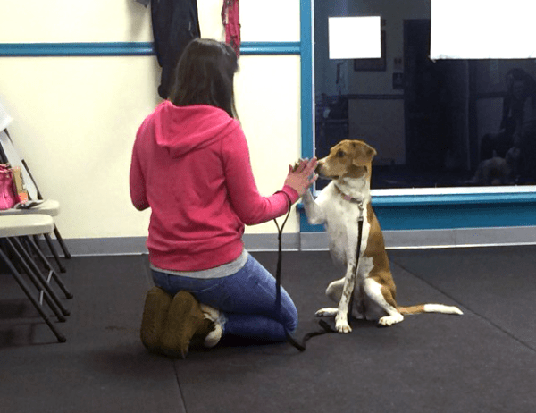 Tricks and Canine Games